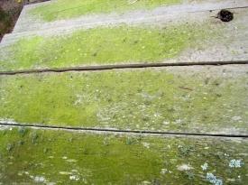 Lichen-stain