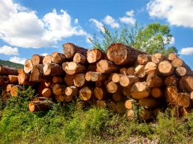 Timber works log pile