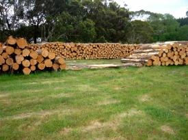 macrocarpa-log-pile-2
