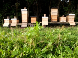 untreated-bee-boxes-on-grass