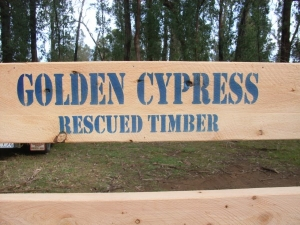 Golden Cypress Rescued Timber