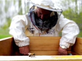 Apiarist and bee.