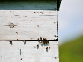 bee home at meadow