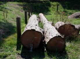 cypress2