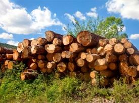 Timber works log pile
